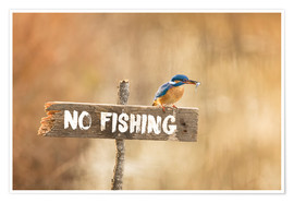 Poster Premium  Fishing prohibited - Dieter Meyrl