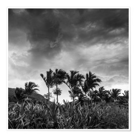 Poster Premium  A stormy tropical scene in paradise of Brazil. - Alex Saberi