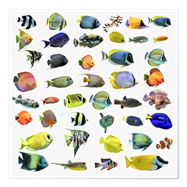 Poster Premium  Fishes of the sea
