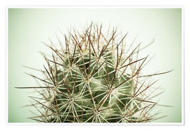Poster Premium  Small cactus, long spikes