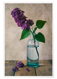 Poster Premium Still life with fresh lilac flower