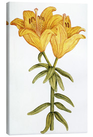 French School - Yellow Lily