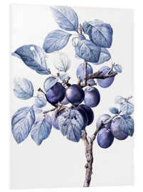 Stampa su PVC  Branch of a plum with fruits - Pierre Joseph Redouté