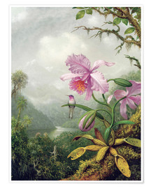 Poster Premium  Hummingbird Perched on an Orchid Plant - Martin Johnson Heade
