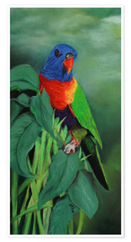 Poster Premium colorful Rainbow lorikeet