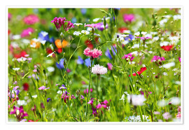 Poster Premium Flower meadow