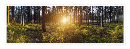 Poster Premium Sunlight in deep forest