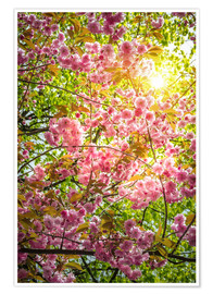 Poster Premium Japanese decorative cherry