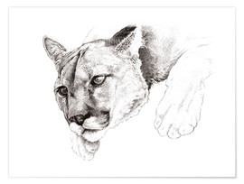 Poster Premium Sketch Of A Captived Mountain Lion