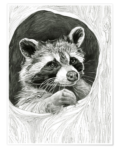 Poster Premium Raccoon In A Hollow Tree Sketch