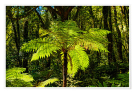 Poster  Tree fern (Cyatheales) in Milford Sound New Zealand - Michael Rucker