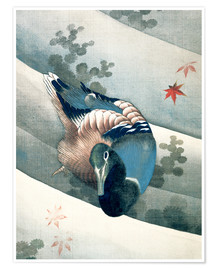 Poster Premium  Duck Swimming in Water - Katsushika Hokusai