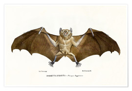 Poster  Egyptian Fruit Bat - Raimundo Petraroja