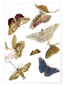 Poster Premium  Moths and butterfiles - Maria Sibylla Merian