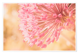 Poster Premium Creamy Summer - Allium in Pink