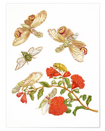 Poster Premium  Pomegranate with Lantern Fly and Cicada - Maria Sibylla Merian