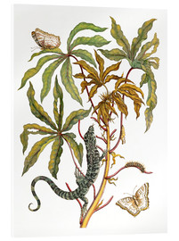 Stampa su vetro acrilico  cassava with crocodile and butterfly metamorphosis - Maria Sibylla Merian