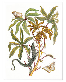 Poster Premium cassava with crocodile and butterfly metamorphosis