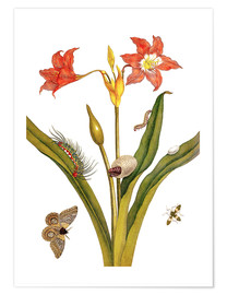 Poster Premium lily with lepidoptera metamorphosis