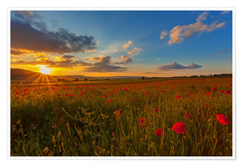 Poster Premium Sundown Poppies