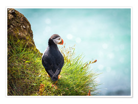 Poster Premium  Puffin looking at the Sea - Sascha Kilmer