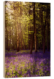 Stampa su legno  Sunny bluebell wood - Sybille Sterk