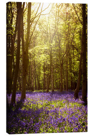 Stampa su tela  Sunny forest with bluebells - Sybille Sterk