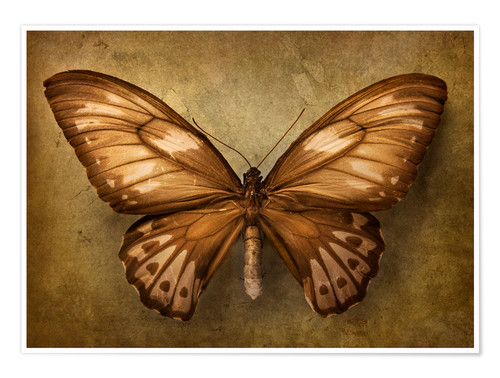 Poster Premium Brown butterfly