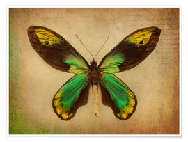 Poster Premium Green butterfly