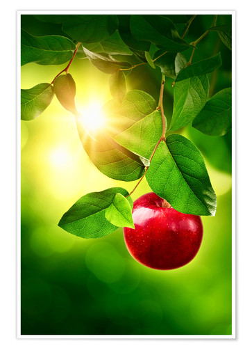 Poster Premium Red apple