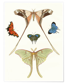 Poster  Different kinds of butterflies - German School