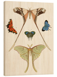 Stampa su legno  Different kinds of butterflies - German School