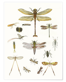 Poster Premium  Strange insects - German School
