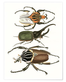 Poster Premium Large and rare beetles