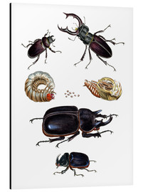 Stampa su alluminio  Strange beetles - German School