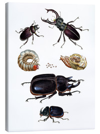 Stampa su tela  Strange beetles - German School