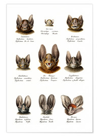 Poster Premium  Different Kinds Of Bats - Karl Joseph Brodtmann