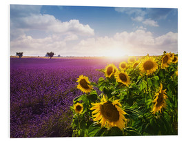 Forex  Lavender and sunflowers fields , Provence - Elena Schweitzer