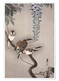 Poster Premium Sparrows on wisteria