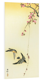 Forex  Starlings and Cherry Tree - Ohara Koson