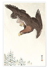 Poster Premium  Eagle in Flight - Ohara Koson