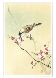Poster Premium Small Bird and Blossoms