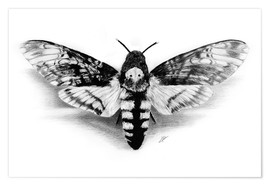 Poster Premium  Death Head Hawk Moth - Christian Klute