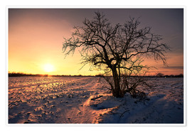 Poster Premium Sunset in winter
