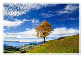 Poster Premium Isolated tree in autumn, Funes Valley, South Tyrol, Italy