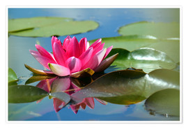 Poster Premium Water lily with reflection