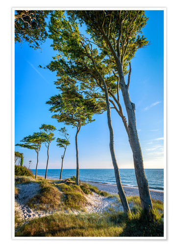 Poster Premium Baltic Sea Beach with Trees