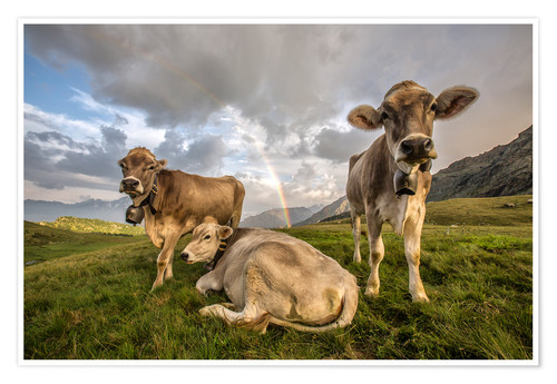Poster Premium Rainbow and cows, Valtellina, Lombardy, Italy