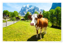 Poster Premium  Miss Willow Cow