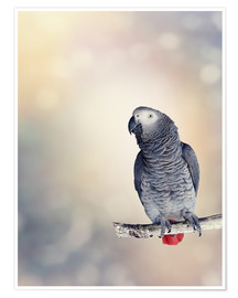 Poster Premium  African Grey on a branch